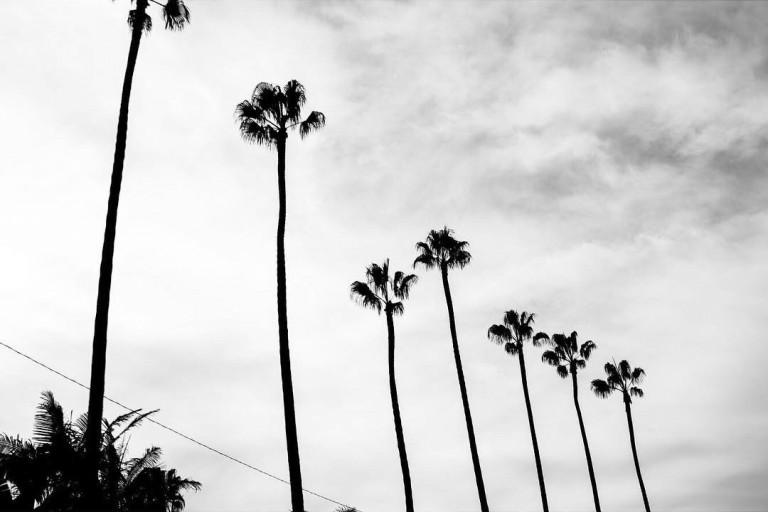 You see trees. We see landmarks.